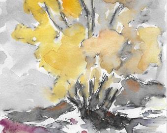 Palo Verde Tree in Blume