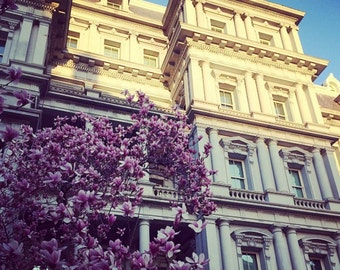 The French White House in Spring Time