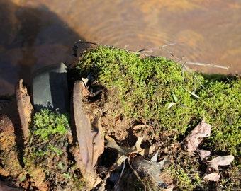 Simple Moss Original Photoprint