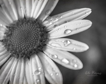 Daisy - Photo - Black & White -Printed Photo -  Printed Image, Macro photograph, Wall Decor, Desktop Photo, Close Up Flowers, Pretty Flowers
