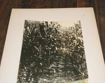 1939 Matted Photograph - Cornfield