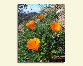 Orange Poppies Canvas, flower canvas wrap, colorful botanical wall art 5x7, 8x10