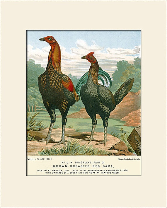 Bird Print, Chickens, Rooster and Hen, Art Print with Mat, Natural History Illustration, Wall Art, Kitchen Decor, Pile Game Birds