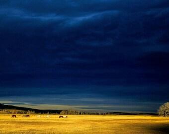 Wild West Horses (Montana USA)