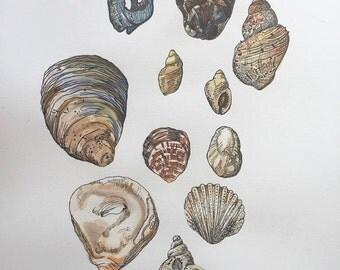 A3 Shell Print