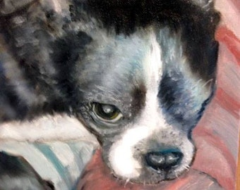 Custom Oil Painting 9x12 of Andi the rescued Boston Terrier