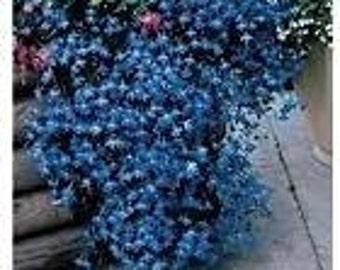 Lobelia Pendula Sapphire- 1000 Seeds