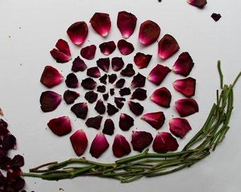 Garden Snail Art Print
