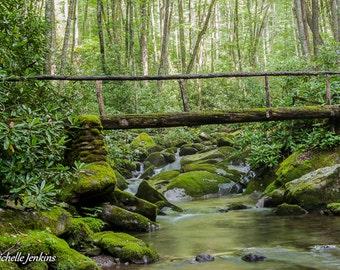 Footbridge over Kephart Prong Print, Creek, Stream, River, Water, Flowers, Bridge, Mountains, Forest, Rocks, Moss