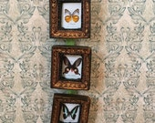 Three framed photo of a butterfly collection for dioramas or dollhouses 1/6  1/12  or 1/16 scale