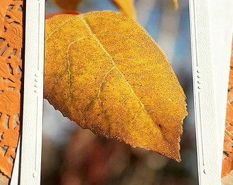"Glitter Accent Ash Leaf Fine Art Photography Card, Autumn, Fall, Changing Colors, Peaceful, Gold, Thankful, Birthday, Friend - 5"" x 7"""