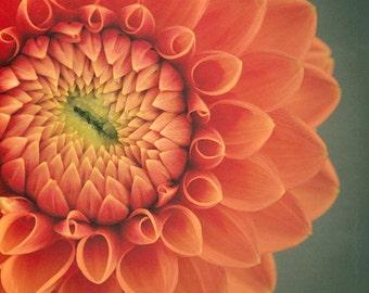 Flower Print Wall Art, Floral Art Print, Dahlia Wall Art, Dahlia Print, Orange Flower Art, Flower Photography, Dahlia Flower Print