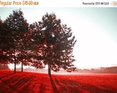 40% OFF SALE Landscape Photography, Nature Photograph, Red Picture, Autumn, Fall, Trees - 5x7 inch Print -Awake