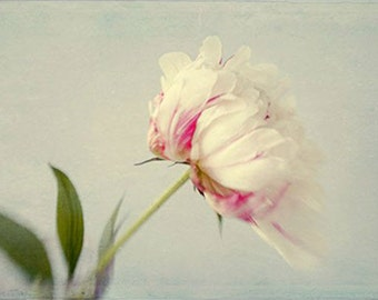 Peony Print, Flower Still Life, Floral Art Print, White Pink Peony Photo,  Floral Wall Decor, Bedroom Decor