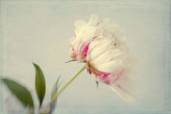 Peony Print, Flower Still Life, Floral Art Print, White Pink Peony Photo,  Floral Wall Decor, Bedroom Decor