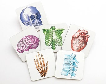 Colorful Anatomy Hardboard Drink Coasters graduation gift anatomical heart brain medical student party favor stocking stuffer teacher cork