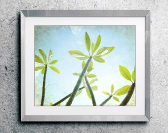 Botanical photography print  plumeria tree leaves blue green tropical wall art - Rise and Shine