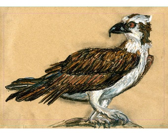 5x7 print Osprey - Bird art mixed media drawing