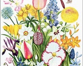 PRINT SALE 20% OFF Vintage 1970 Flowering Bulb Plants Big Bouquet Floral Print for Framing, Loads of Color and Blooming Bulb Garden Flowers