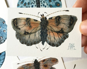 Butterfly BOTEIN, miniature small watercolor painting