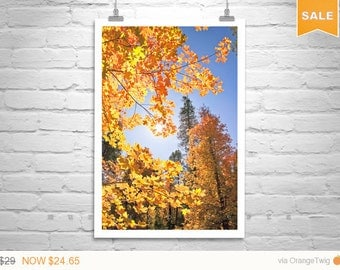 Sale 15% Catalina Mountains Art, Tucson, Nature Photography, Autumn Leaves, Fall Leaves, Maple Leaf Art, Fine Art Photography, Vertical Art