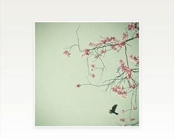 SALE 25% OFF Bird Photography, Flower Photograph, Blossom Tree, Feminine Bedroom Art, Spring, Floral Wall Art, Mint, Pink - Free as a Bird