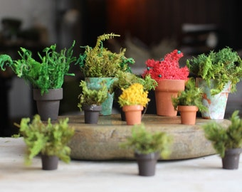 11 Miniature Flower pots filled with Lichens & Moss-CLEARANCE-What you see is what you get-Preserved Moss