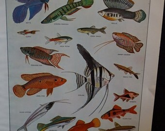 Vintage Webster's New International Dictionary Illustration Tropical Fishes