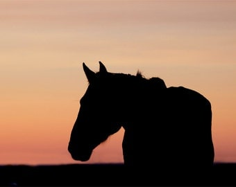 Horse Silhouette at Sunset Photograph - 11x14 Color Horse Photography Print