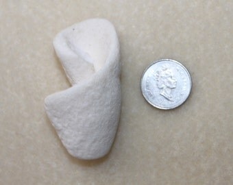 AWESOME BEACH FINDZ Beautiful white Shell like object Not exactely sure of Origin.  zy 069