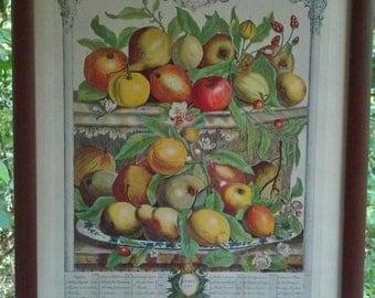 Vintage 1940s Lithograph Fruit Still Life April 1732 Apples