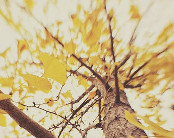 "Autumn Nature Art Photograph ""Autumn's Muse"" fine art nature fall photograph wall art home decor wall art trees forest. 8x10, 11x14, 16x20"