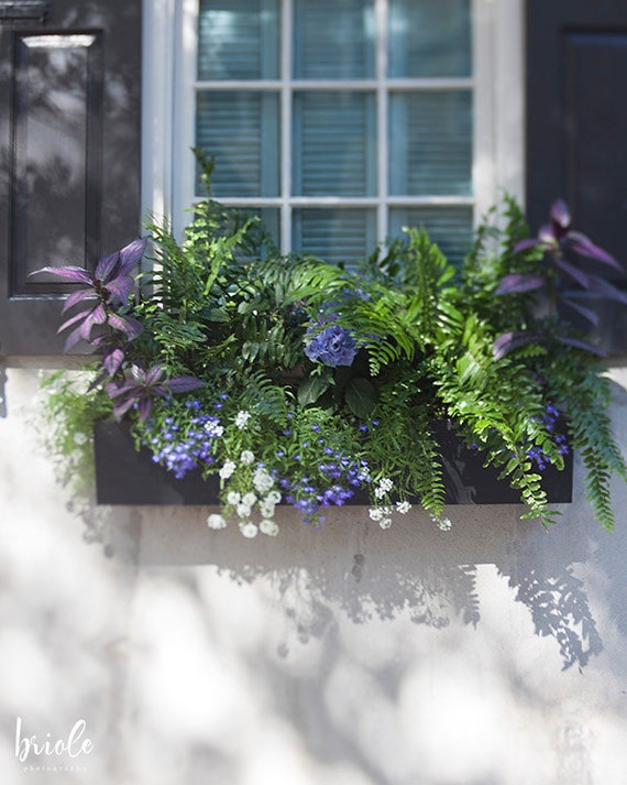 Window photography charleston sc print flower window box for T shirt printing charleston sc