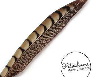 Lady Amherst Pheasant Side Tail Feather for Millinery, Hat Making (Single Feather) 22-25cm - Natural
