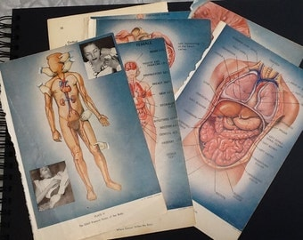 Vintage Artist Medical Diagram Book Pages Anatomy Plates Heart Fetus Development