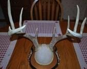 Vintage Set of Beautiful Mounted Deer Antlers, Taxidermy, Mancave, Bar Decor.