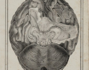 1825 Antique print of BRAIN ANATOMY print, original antique Brain lithograph 191 years old