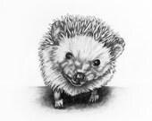 Original Animal Pencil Drawing - Hedgehog 1