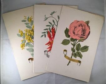 Vintage Orient Line Floral Menu Covers