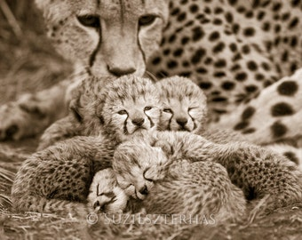 Baby Cheetah Cubs Photo, Sepia Print, Baby Animal Photography, African Wildlife, Nursery Print, Baby Nursery Decor, Safari Nursery Art, Cat