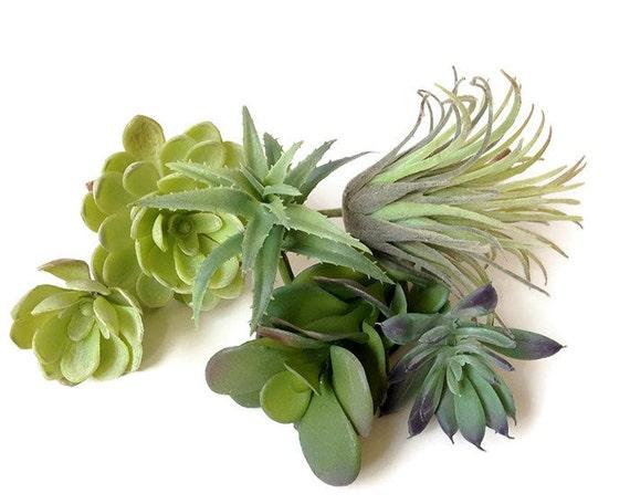 collection de plantes succulentes faux succulente. Black Bedroom Furniture Sets. Home Design Ideas