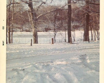 Digital Download, Vintage Photo, Snow Covered Lake and Trees, Color Photo, Snapshot, Found Photo, Old Photo, Printable Photo