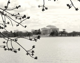 Black and White Photography - Washington DC Print - Architectural Photograph - Minimalist Wall Art Budding Cherry Blossoms Washington Spring