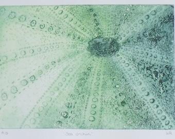 Sea urchin original solar etching print in green artist proof
