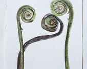 Botanical Woodland Fiddlehead Ferns Art Etched Into Nature No.2 Watercolor 9x9 Print