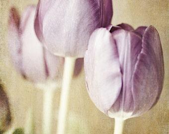 Pastel Purple Flowers Print or Canvas Wrap, Shabby Chic Decor, Bathroom Art, Purple Flower Photography, Tulips, Pastel Nursery Decor.