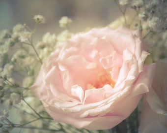 Rose Floral Photography soft,delicate,pink rose,elegant floral print,baby's breath,soft pink,dreamy,girly,baby nursery,feminine home decor