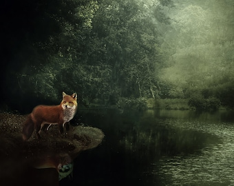 Fox nature photo, fine art photo, Fox art print, dark green orange, woodland, rain, misty, wildlife wall decor