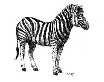 Zebra matted Print- limited edition. wild animals, black archival pen and ink. 5x7.