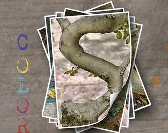 LETTER S Alphabet Photography LETTERS - Color Alphabet Photos